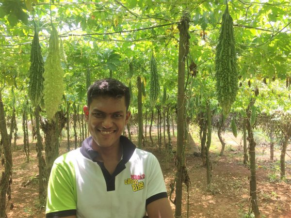 Sustainable advancements for bitter gourd farming in Sri Lanka