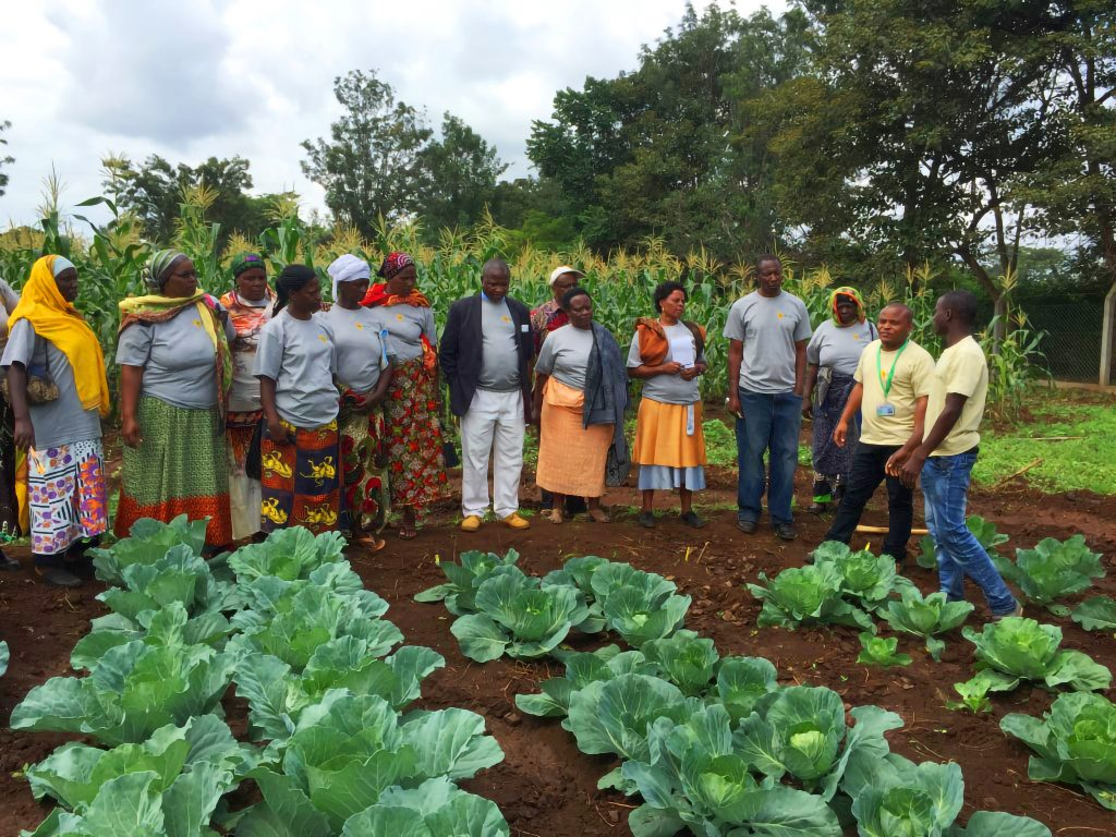 Farmers participate in a field demonstration showcasing improved production  practices for cabbages 8a5bb721f4093